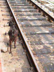 Train pour Madurai