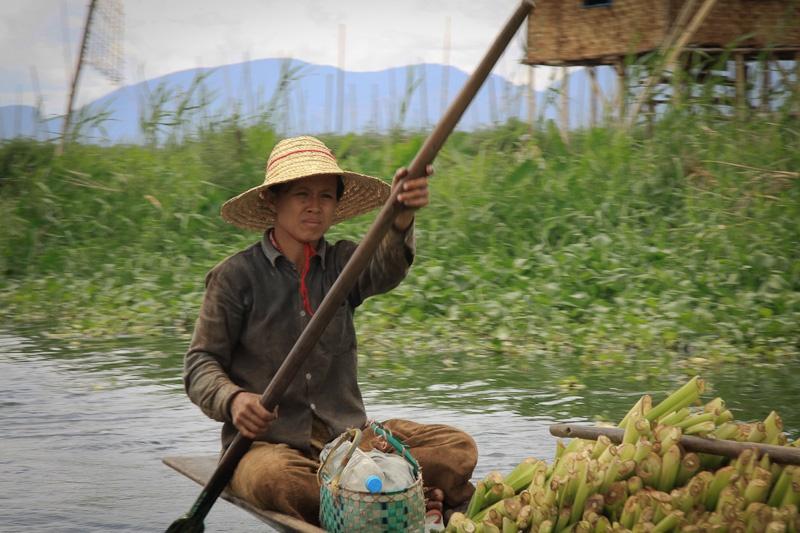 Ramasseuse de légumes - lac Inlé Birmanie