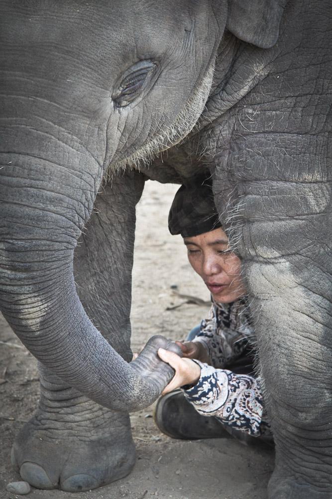 Lek Chailert - Elephant nature park avec le bébé 2