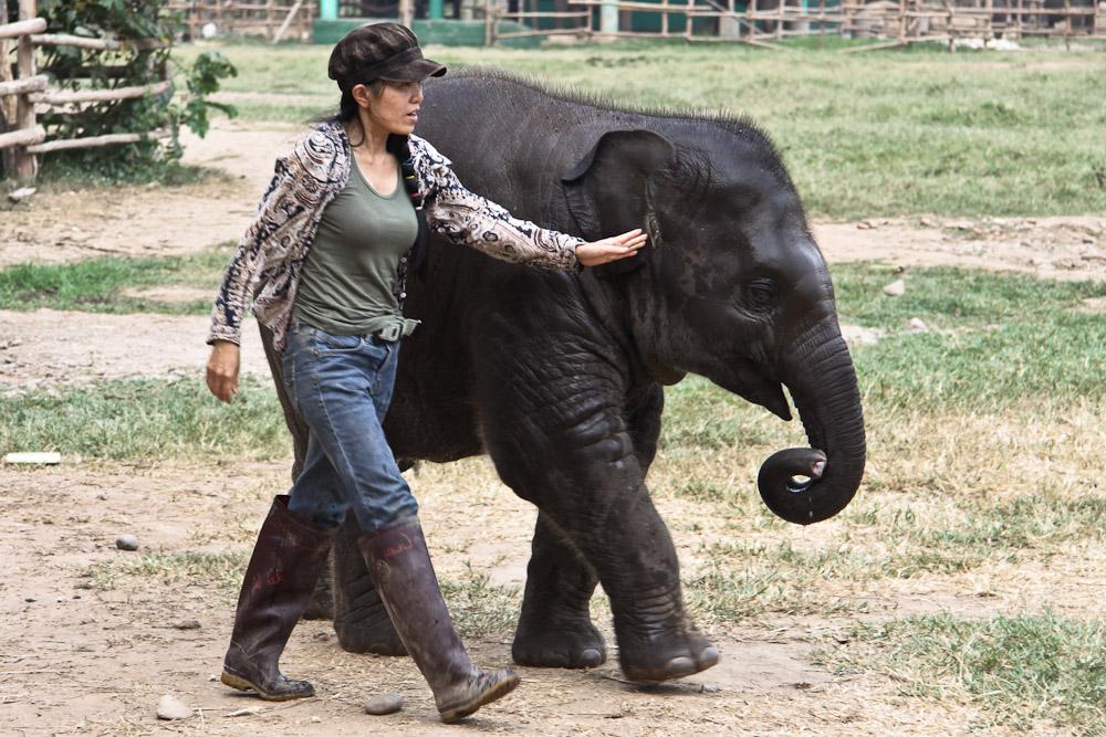 Lek Chailert - Elephant nature park avec le bébé