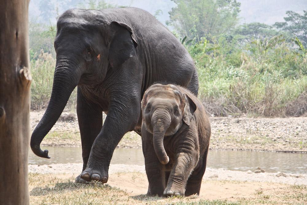 Lek Chailert - Elephant nature park famille