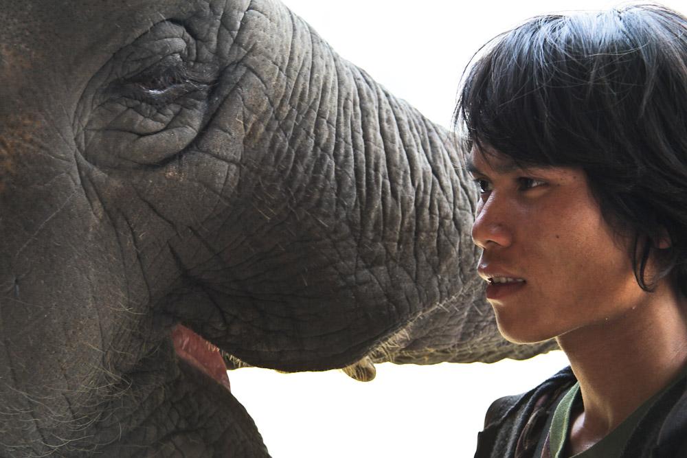 Visiter l'Elephant nature park à Chiang Mai