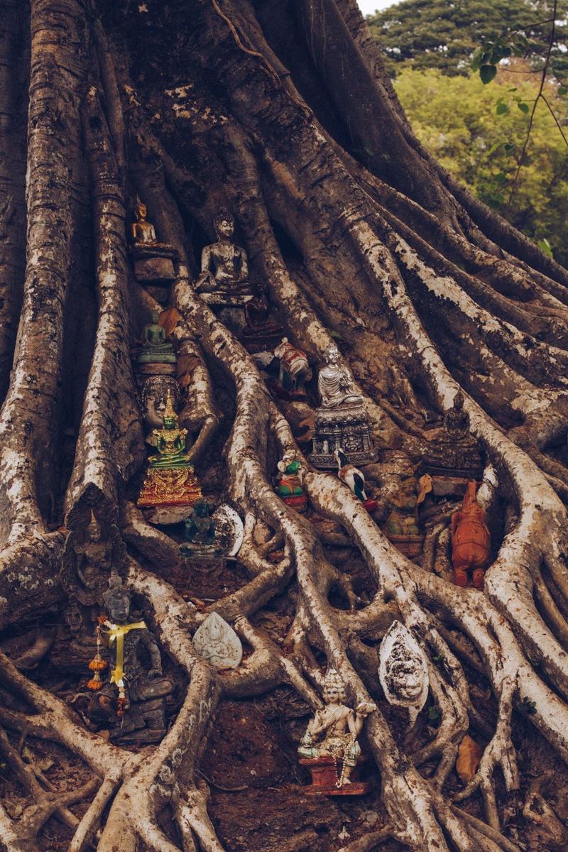 Divinités posées sur un banyan situé à proximité du Wat Si Sawai, un temple du parc historique de Sukhothai en Thaïlande