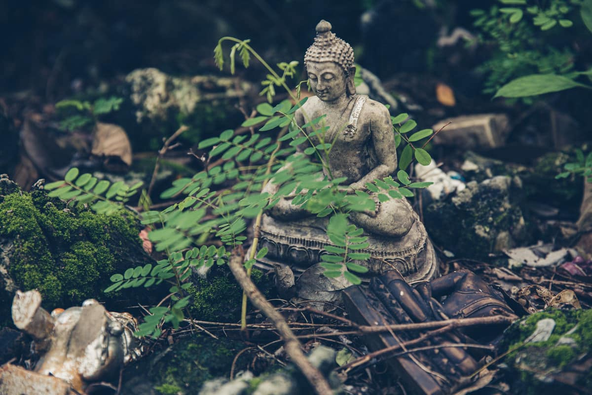 Visiter Chiang Mai, c'est se plonger dans ses temples. Mon préféré est le Wat Umong à l'extérieur de la ville