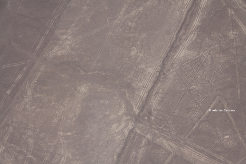 Survoler les Lignes de Nazca - araignee