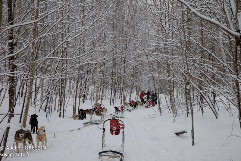 Pause dans les bois traineau à chiens