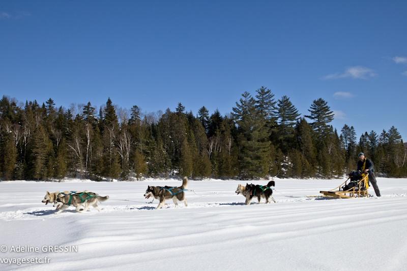 Traineau à chiens Mika aventures