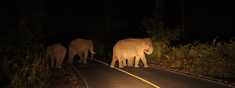 Elephants de Khao Yai thailande