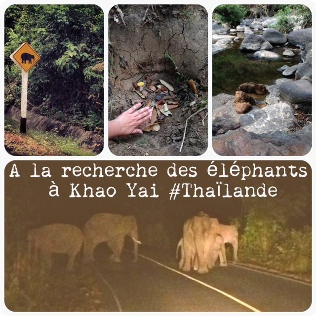 A la recherche des éléphants de Khao Yai