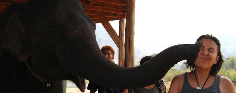 Thailande - Elephant nature park