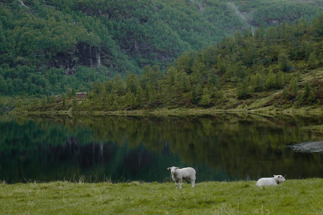 Randonnée dans la vallée d'Aurland dans les fjords en Norvège