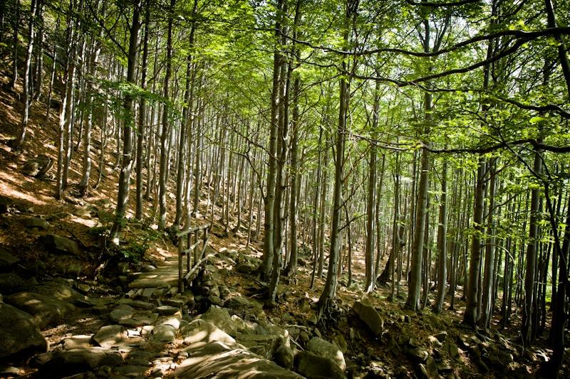 Randonner en Italie - A travers les bois de hêtres