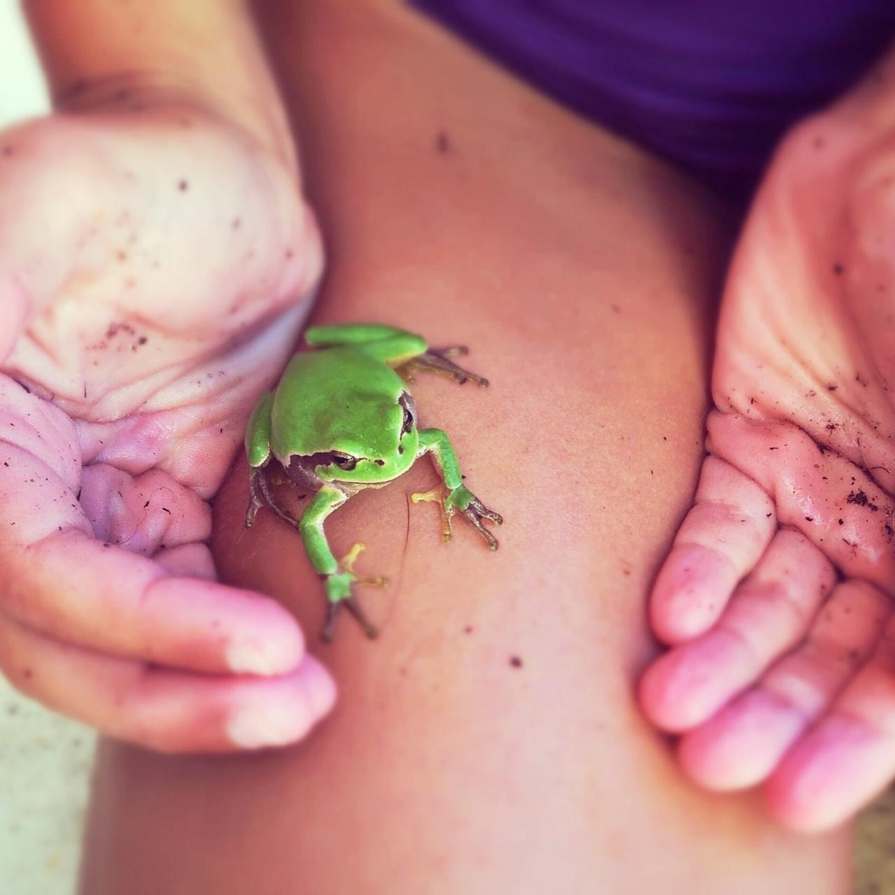 Une grenouille et des mains