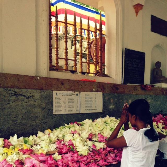 Bouddhisme au Sri Lanka - Prière anuradhapura