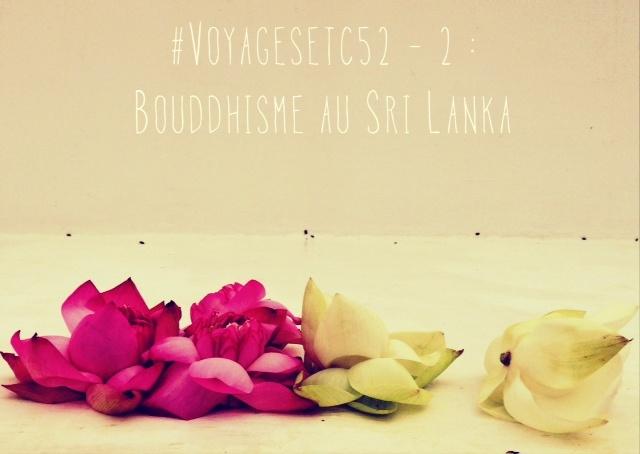 Bouddhisme au Sri Lanka - fleurs de lotus
