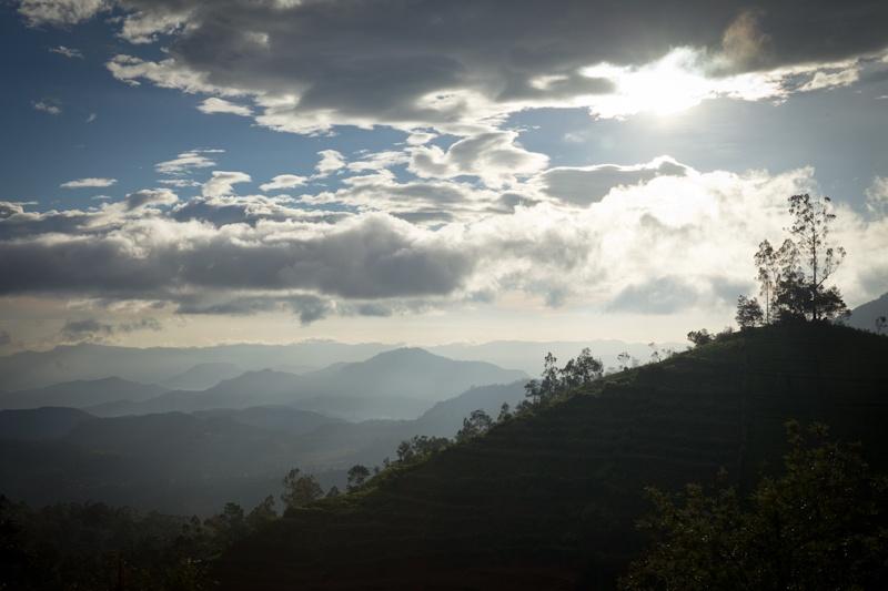 Heritance Tea factory - vue sur la vallée