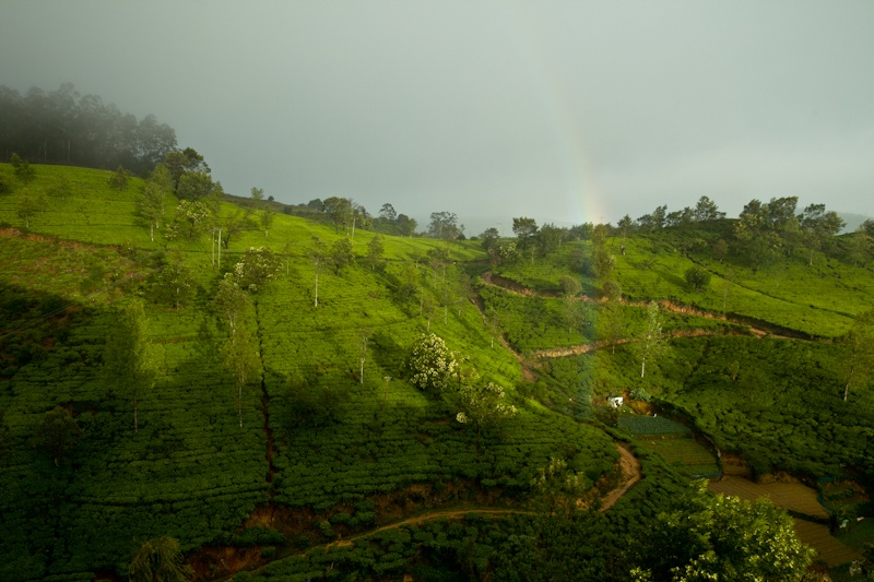 Heritance Tea factory - arc en ciel sur la plantation