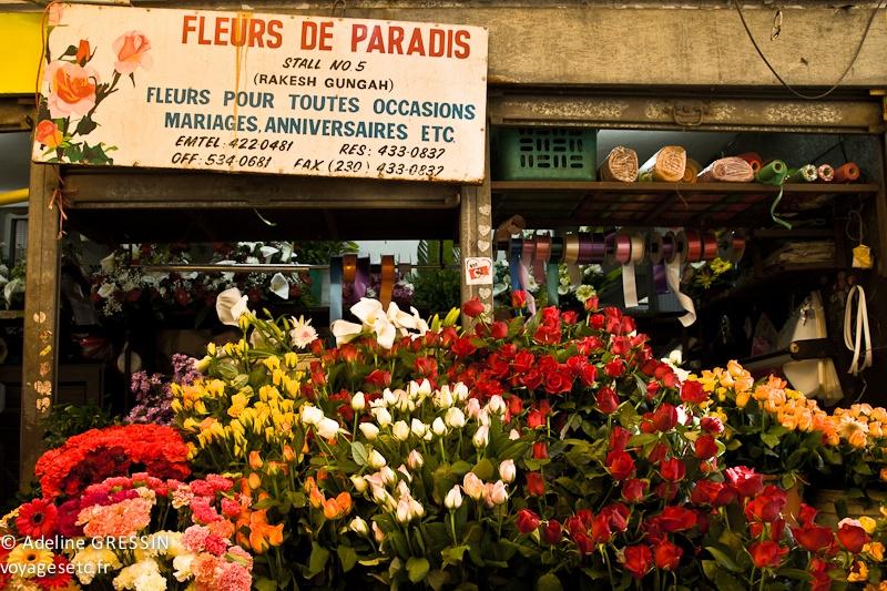 Marché de l'ile Maurice - Fleurs de paradis
