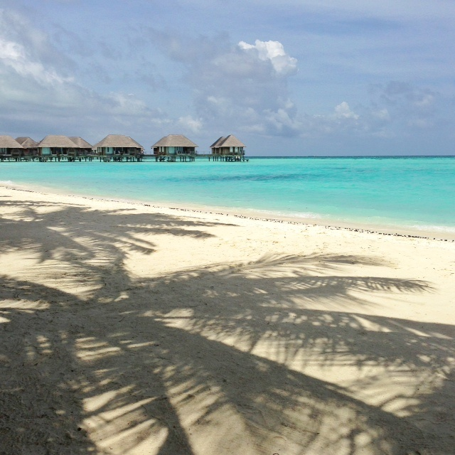 Plage du club med Kani - à l'ombre des palmiers