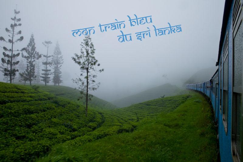 Prendre le train sri lanka - Dans les plantations de thé