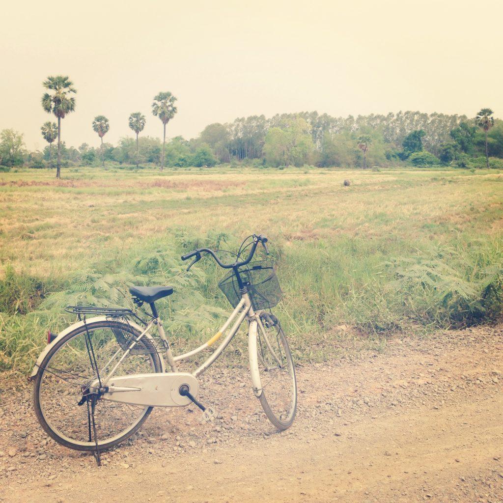 Phimai - vélo dans les rizières