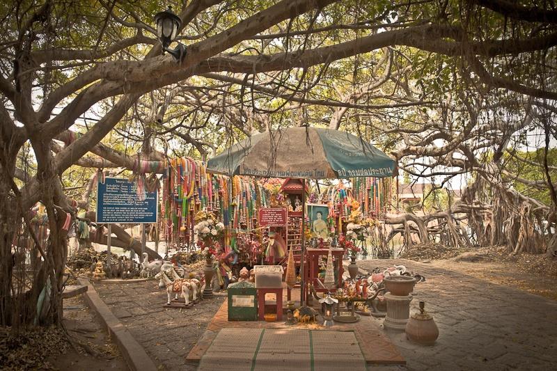Phimai - sous le banian tree