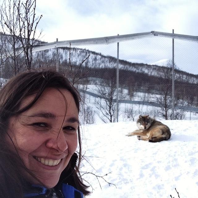 Selfie avec un loup polar park norvege