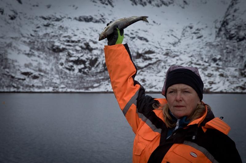 Norvege Lofoten - Safari des mers à la recherche de l'aigle