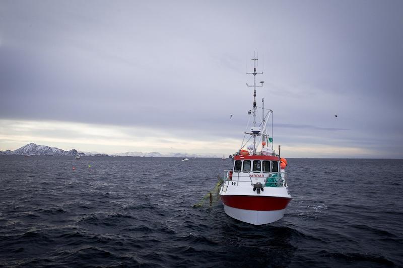 Norvege Safari des mers lofoten - à la pêche