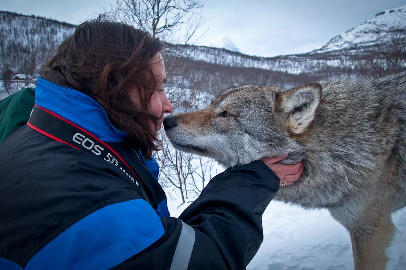 Polar Park Norvege - Embrasser un loup