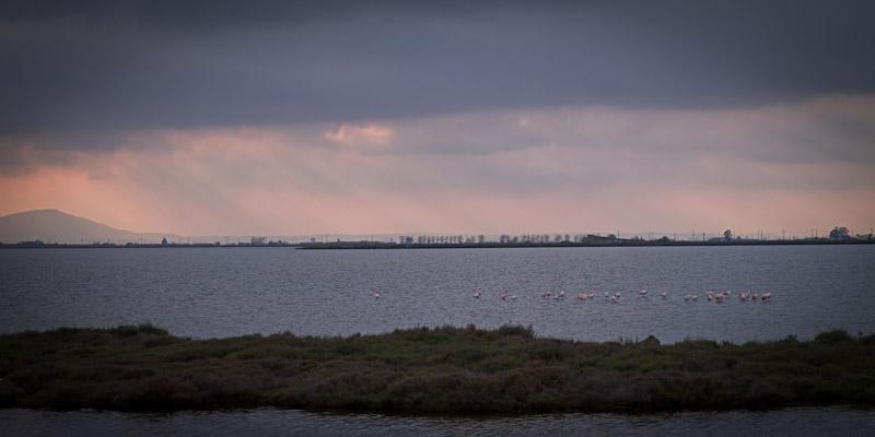 Ecotourisme en catalogne - Reserve ornothologique du delta de l'Ebre