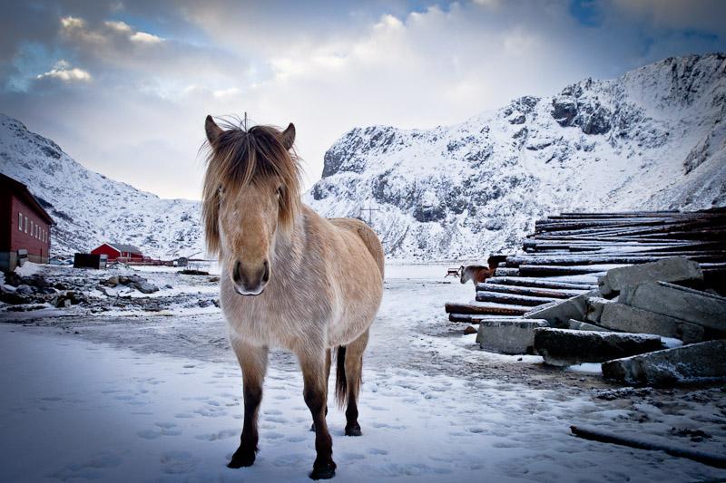 Surfer à Unstad Norvege - Le poney roux