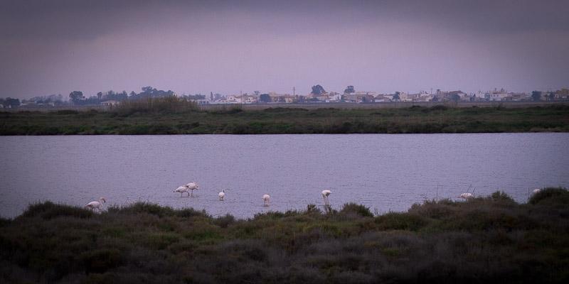 Ecotourisme en Catalogne - Delta de l'ebre reserve ornithologique