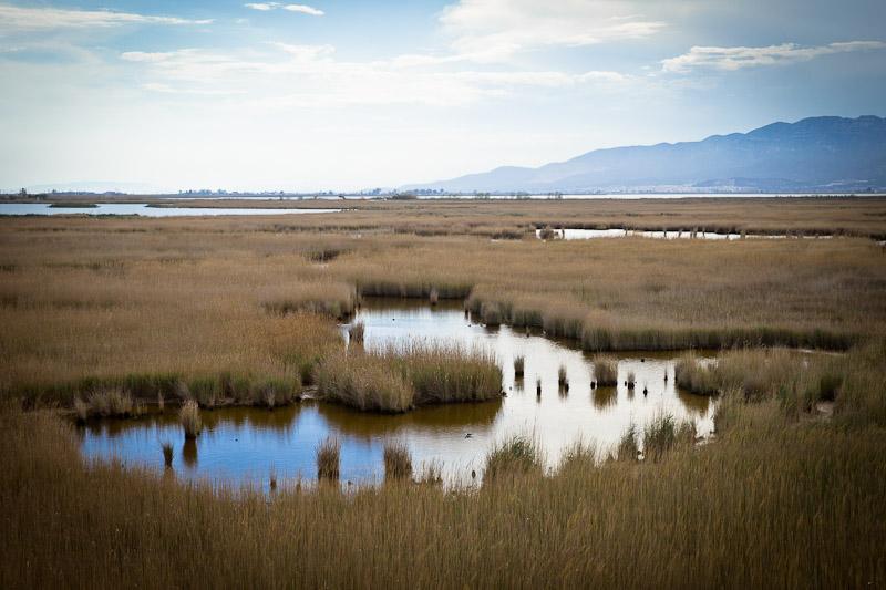 Ecotourisme en Catalogne - ornithologie dans le delta de l'ebre