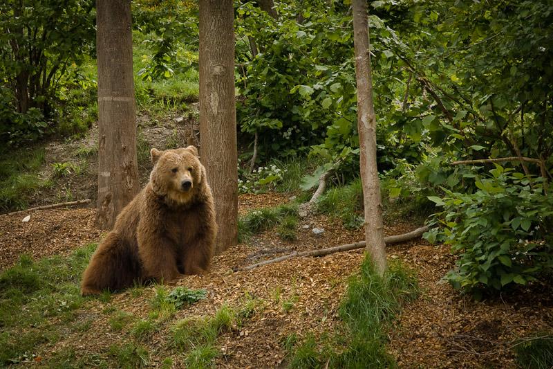 week-end a Berne - l'ours de la fosse