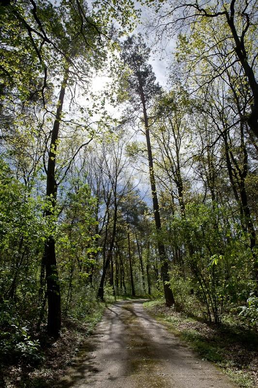 Visiter un bunker - Forêt près du bunker