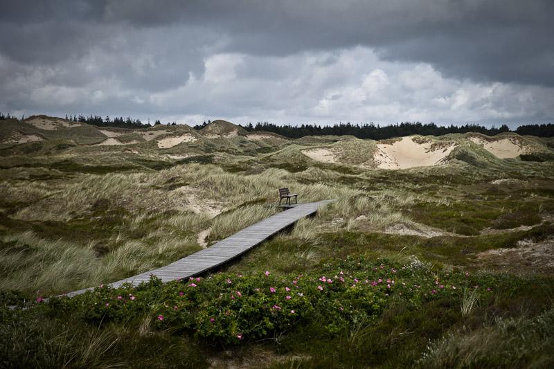 Amrum - les dunes