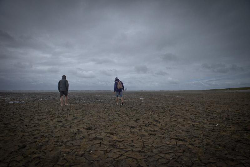 Mer des Wadden - A la découverte de l'ecosystème