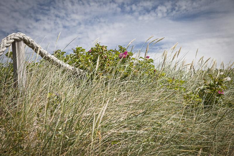 Mer des Wadden - Les herbes dans les dunes