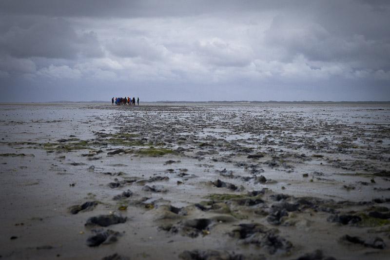 Mer des Wadden - les pieds dans les boue