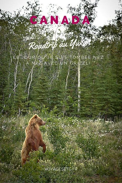 Lors de mon roadtrip au Yukon, quelle ne fût pas ma surprise de tomber nez-à-nez avec un grizzli. Je vous raconte toute l'histoire de ce face-à-face magique (puisque j'étais dans la voiture)