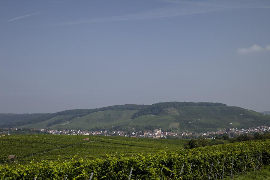 les vignes de Heilbronn bade wurtemberg