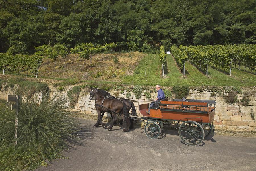 Bade wurtemberg - calèche dans les vignes heilbronn