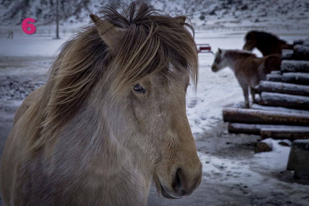 6- le poney d'Unstad lofoten norvege