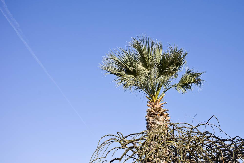 Vue sur la Provence - Palmier
