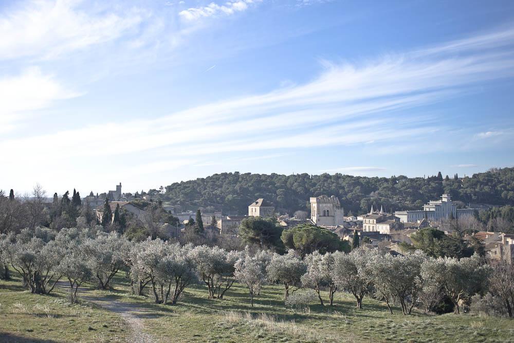Vue sur la provence - verger d'oliviers