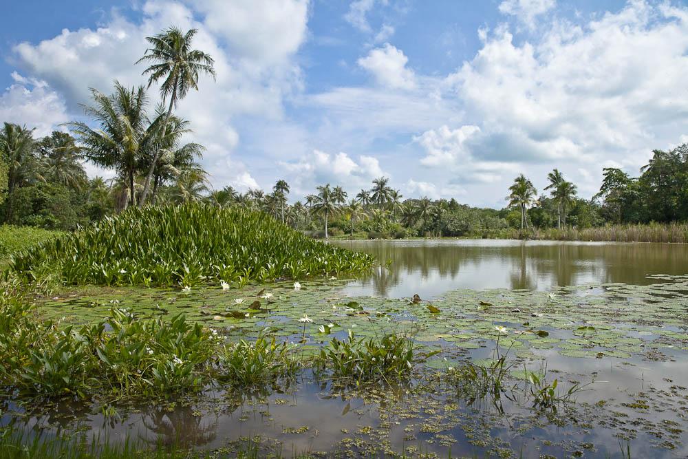 Pulau Ubin, une île chinoise authentique au large de Singapour