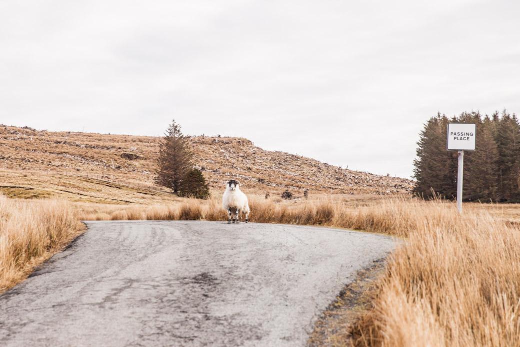 Les fameux passing place que l'on trouve sur les petites routes d'Ecosse