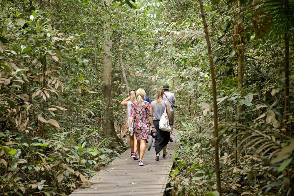 Que faire à Singapour ? Réserve naturelle de Bukit Timah pour se promener dans la forêt à Singapour
