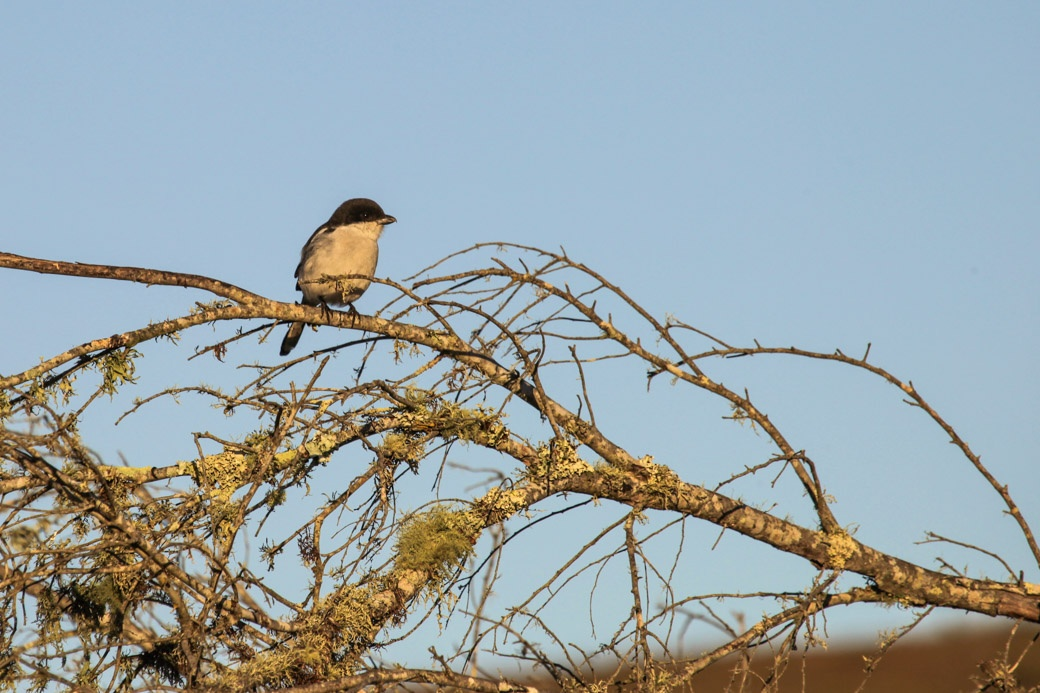Safari en Afrique du sud - Petit oiseau du bush